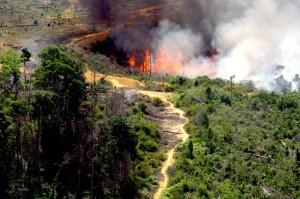 Kobaran Hebat di Hutan Riau